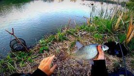 Вечерняя рыбалка, крупный карась, подлещик, густера, вобла