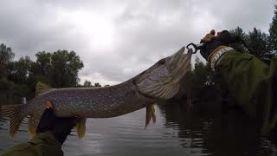 Рыбалка в Мордовии. Окунь, Щука, Голавль. (Съесть или не съесть? Вот в чём вопрос)