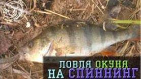 Ловля окуня на спиннинг в Тольятти
