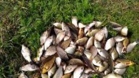 Рыбалка в Узловском районе Тульской области