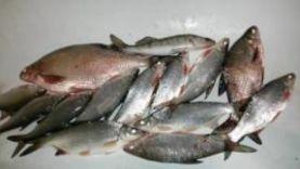 Ловля леща и рыбца в Ростове на Дону зимой