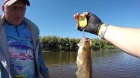 р. Мокша Удачная рыбалка на джиг :) в Рязанской области