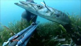 Подводная охота на 9,2 кг барраукуду, Каны-Франция 2015