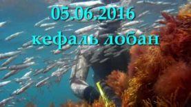 Подводная охота в Крыму, июнь 2016