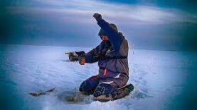 Ловля окуня и сороги зимой БЕЗМОТЫЛКА ФОРЕВА! Зимняя рыбалка на безмотылку