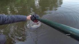 Карп 10 кг на фидер в Харьковской области