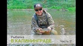 Рыбалка в Калининграде. Окунь и форель на ультралайт