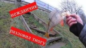 Рыбалка на Москва реке г. Красногорск, Мякиино 2018