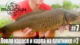 Ловля трофейного карпа и карася на платнике на соску и бойлы в Беларуси