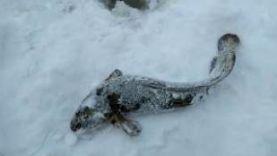 Лайфхак по ловле налима зимой