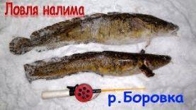Ловля налима на малой реке Боровка в Оренбургской области