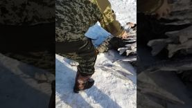 Щука и налим зимой на жерлицы, Амурская область, Талакан