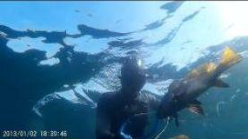 Подводная охота в Крыму-осень 2015