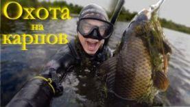 Подводная охота на карпа в Челябинской обл