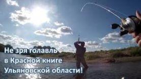 Не зря голавль в Красной книге Ульяновской области :)