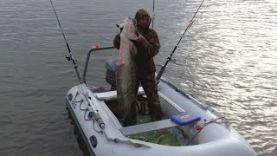 СОМ на 35 кг, ловля сома в Астраханской области, река Ахтуба 2017