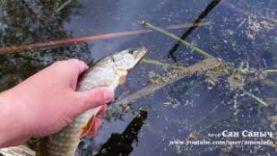 Проверяю силикон от Фанатик на рыбалке по окуню