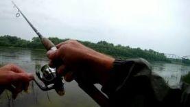 Ловля окуня на отводной поводок Часть – 1