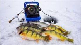 Ловля окуня и судака со льда, Северная Дакота февраль 2018