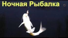 РЫБАЛКА НА КАРПА: НОЧНАЯ РЫБАЛКА, ЛОВЛЯ КАНАЛЬНОГО СОМИКА И ТИЛЯПИИ , ПОПЛАВОЧНАЯ УДОЧКА, ПОПЛАВОК- СВЕТЛЯЧОК FISHING